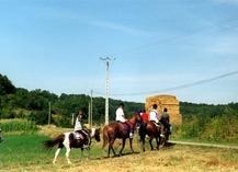 Ferme Equestre Crinière au Vent - Monbalen