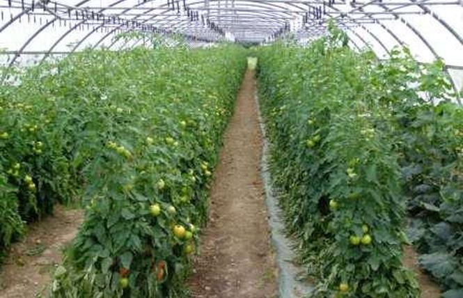 La ferme d'Al Souysse 1 - Laroque-Timbaut